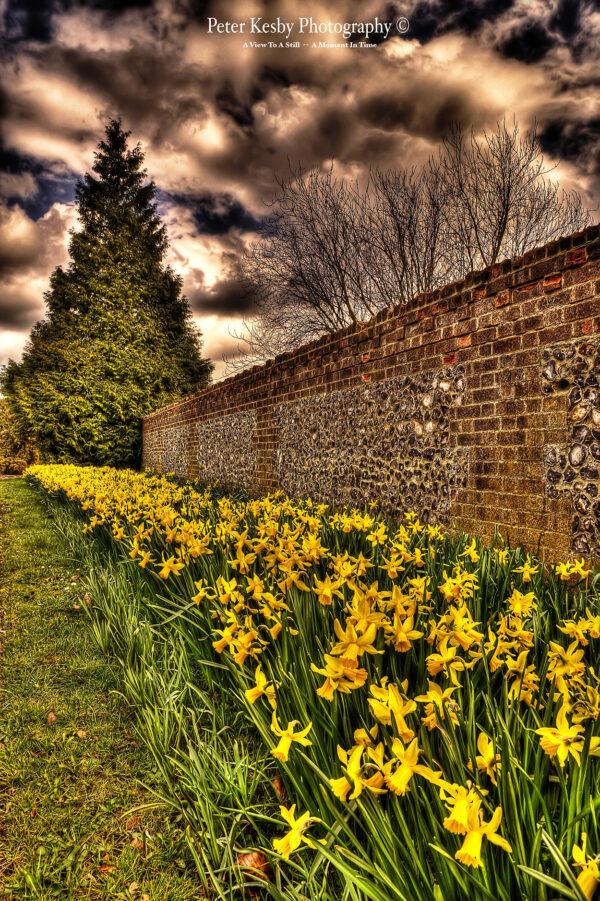Kearsney Abbey - Entrance - Daffodils