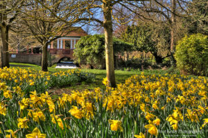Russell Gardens - Bridge And Daffodils - Spring