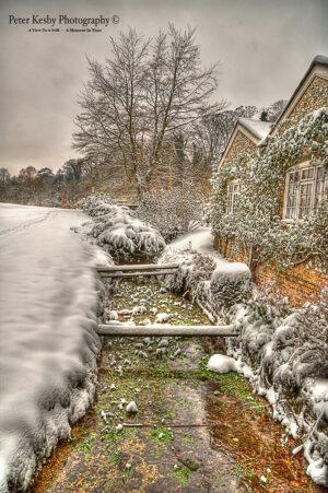 Bushy Ruff - Stream -Snow