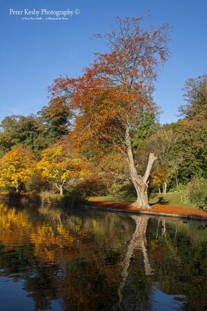Bushy Ruff - Autumn #2