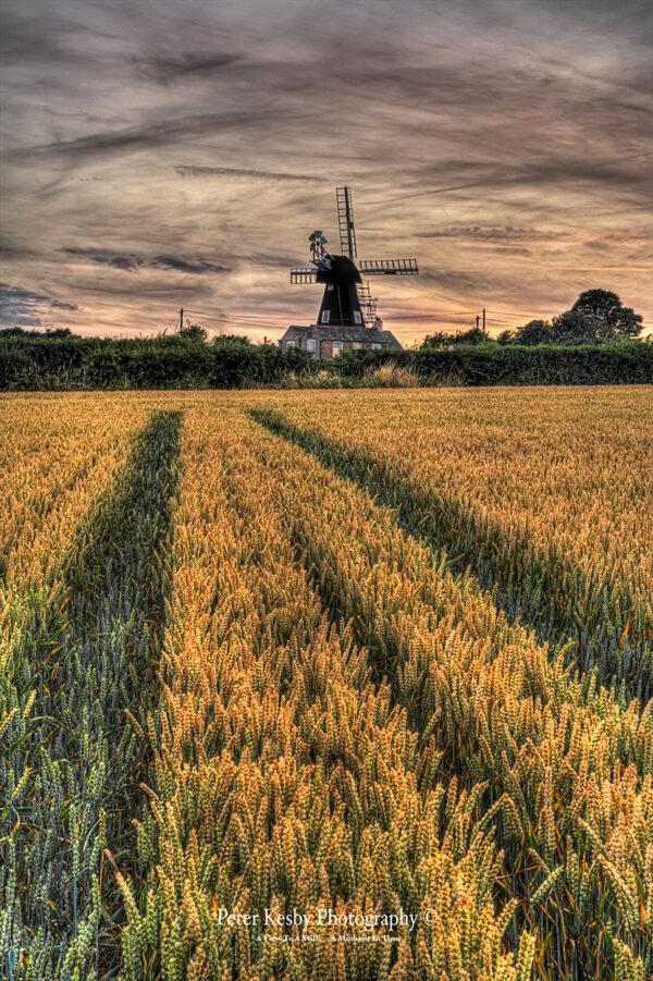 Wheat Field - Ripple Mill - Ringwould