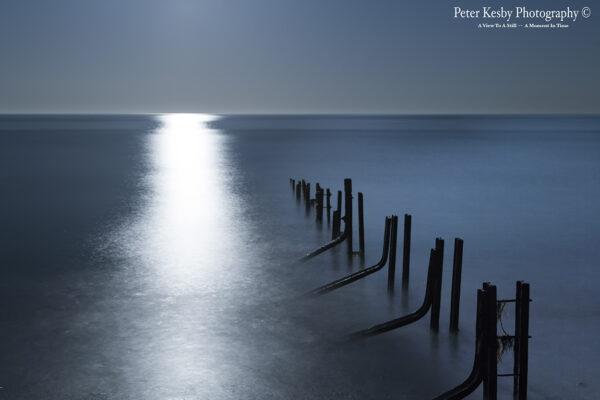 Moonlit - The Warren