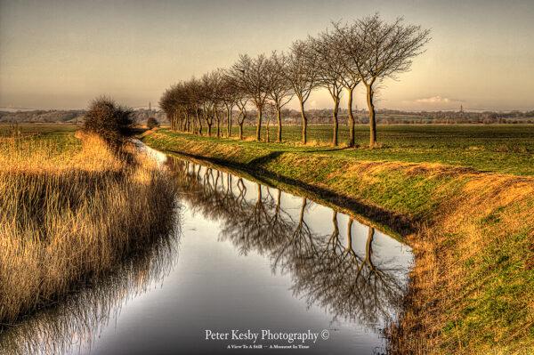 Tree Reflection - Romney Marsh
