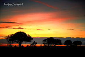 Ripple - Sunset - Trees