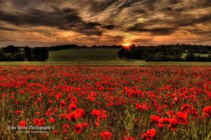 Poppy Field - Tilmanstone - Sunset