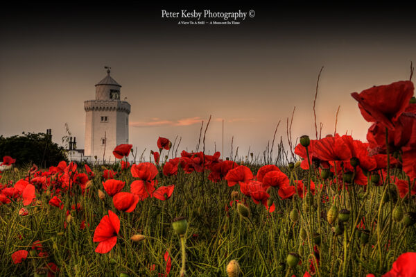 South Foreland Lighthouse - Poppies