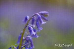 Clear bell - Bluebell Truss