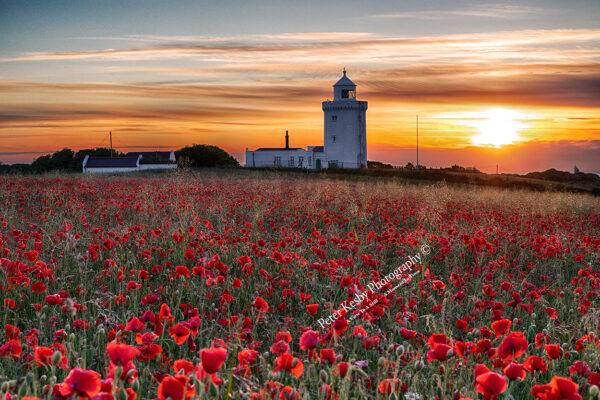 South Foreland Lighthouse - Sunrise - Poppies