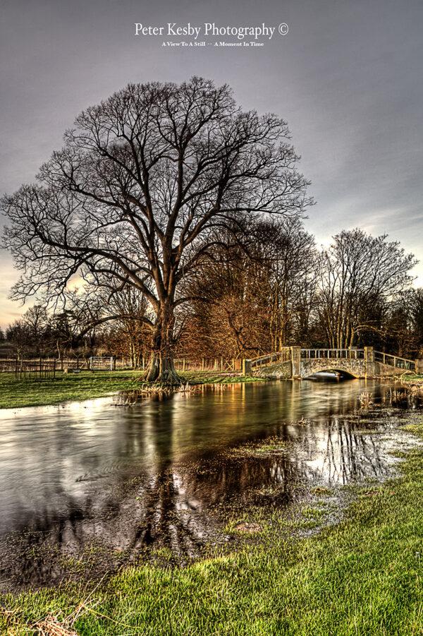 Bridge - Tree - Reflection