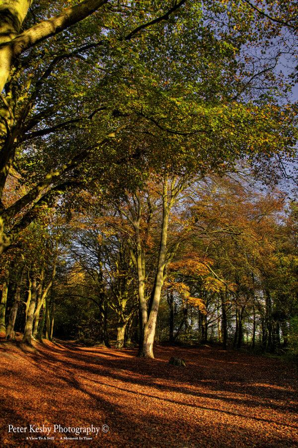 Willow Wood - Autumn