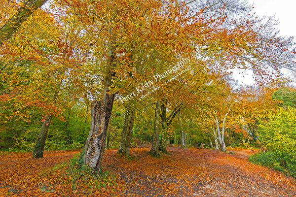 Pilgrims Nook - Autumn #1