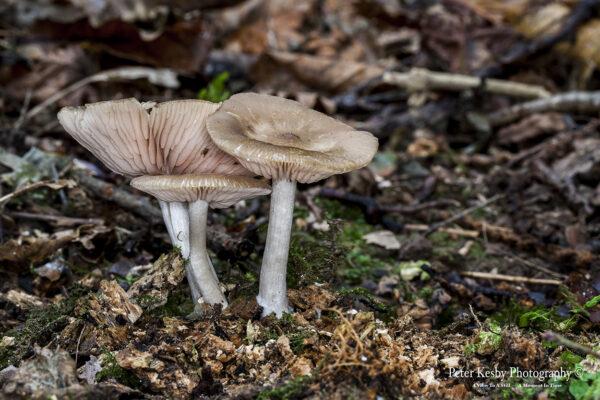 Fungi - #1