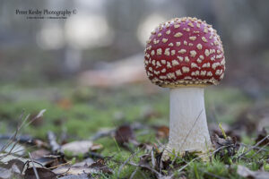 Fungi - #11
