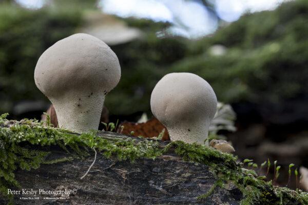 Fungi - #12