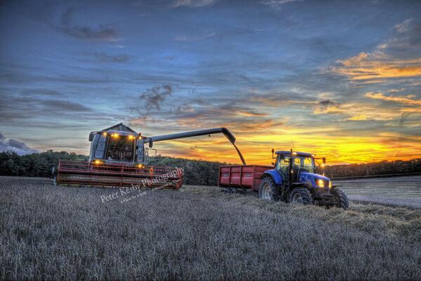 The Harvest At Sunset