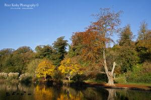 Bushy Ruff - Autumnal reflection