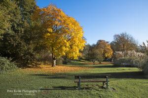 Bushy Ruff - Autumn #1