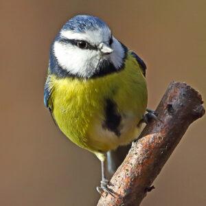 Wood & Marshland Birds